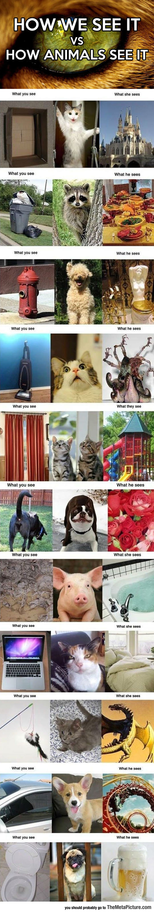 How Humans See It Vs. How Animals See It