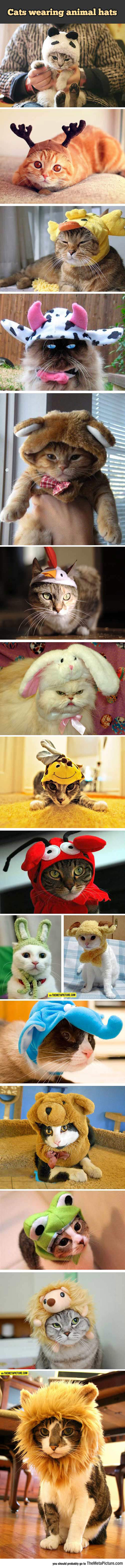 cool-kittens-compilation-hats-caps