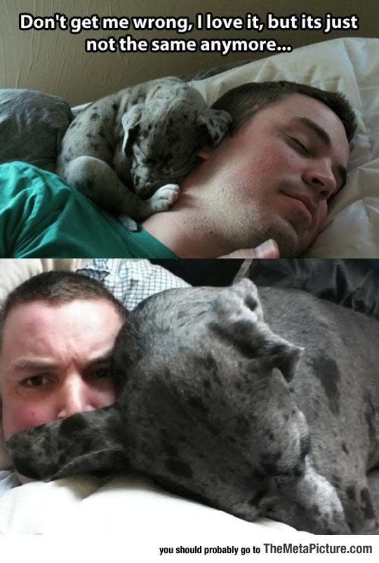 cool-little-dog-big-bed