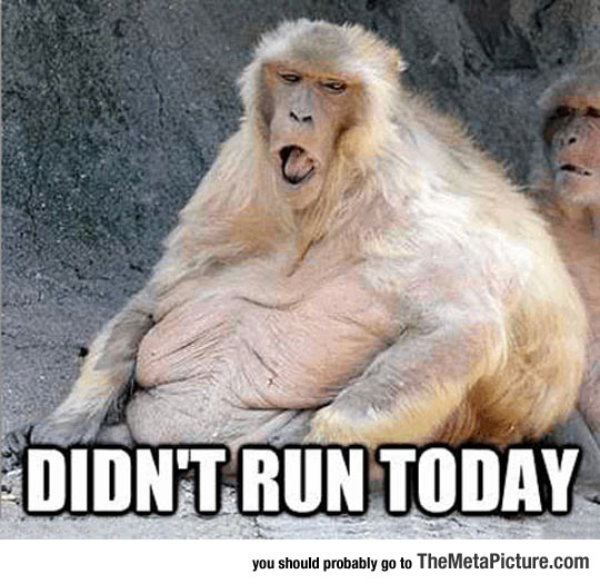 cool-monkey-run-fat-today