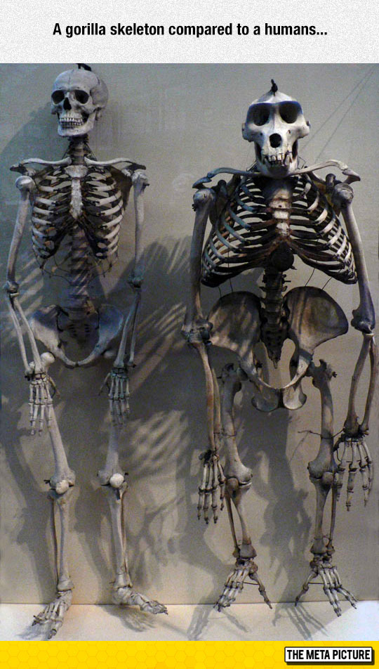 cool-monkey-skeleton-ape