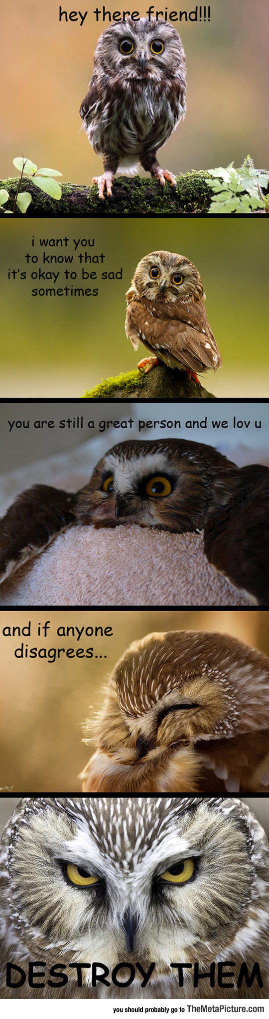 cool-owl-sad-destroy-cute