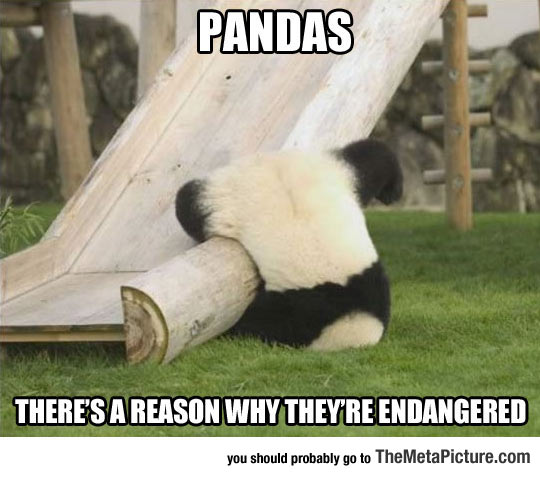 Silly Panda That Is Not The Way You Playground