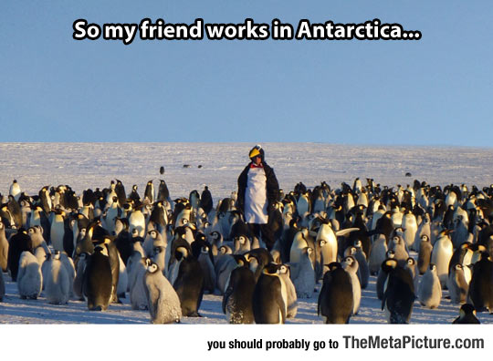 cool-penguin-suit-worker