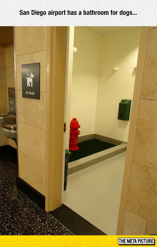 cool-pet-restroom-airport