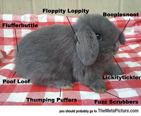cool-rabbit-description-cute