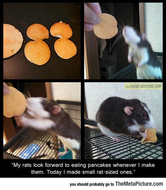 cool-rat-sized-pancakes