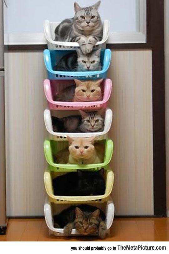 cool-shelf-cat-storage