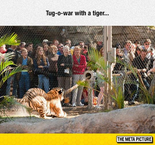 cool-tiger-big-rope