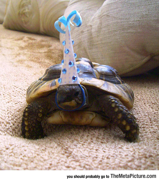 This Tortoise Celebrated Its Birthday Today