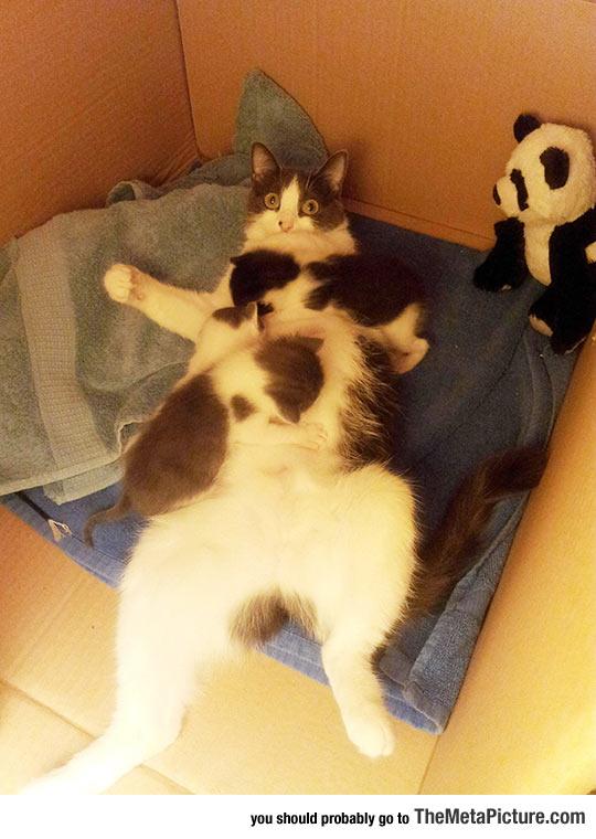 cute-cat-mother-kittens