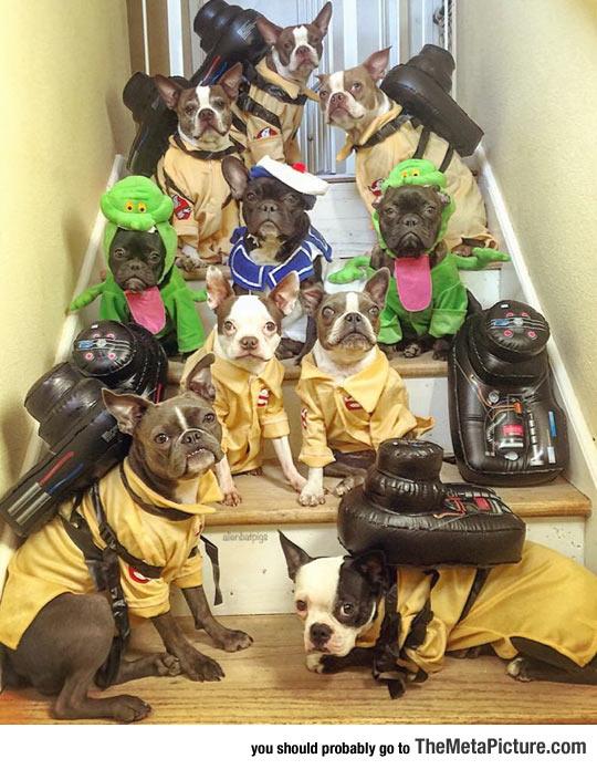 cute-dogs-Ghostbuster-costume
