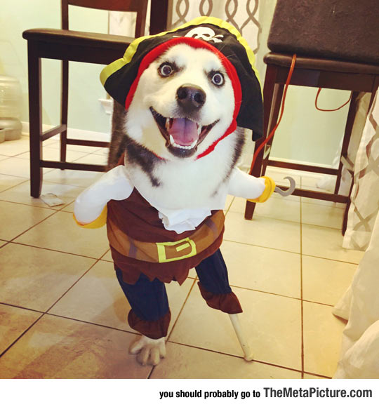 How A Three Legged Dog Celebrated Halloween