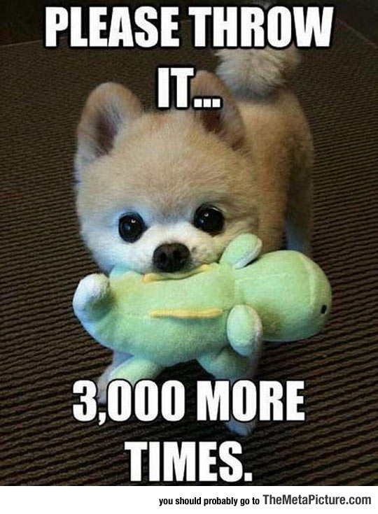 cute-little-puppy-toy-play-throw