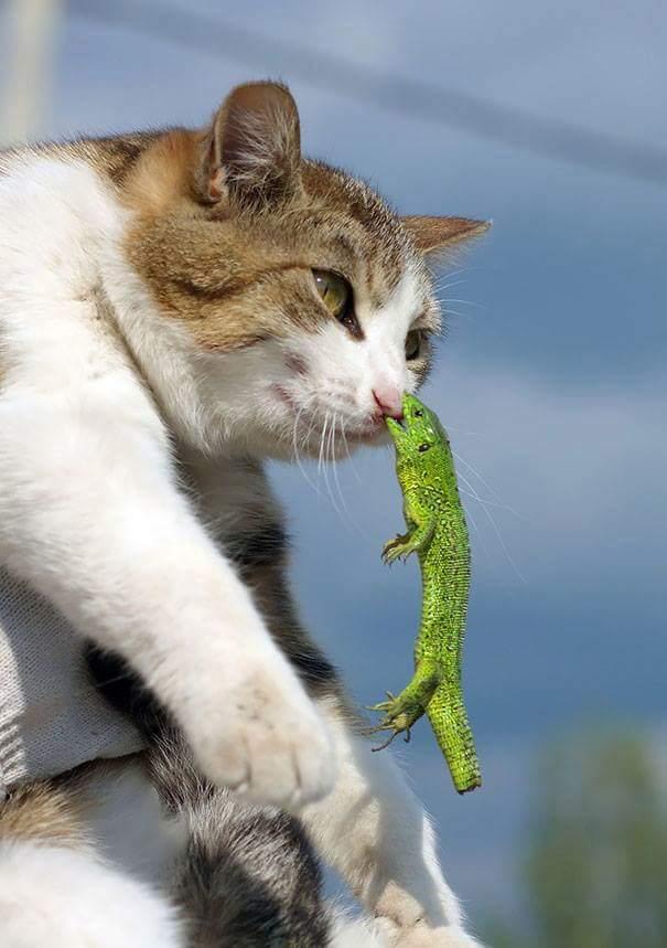 cute-lizard-cat-nose