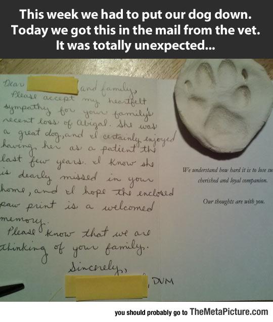cute-vet-letter-dog-paw