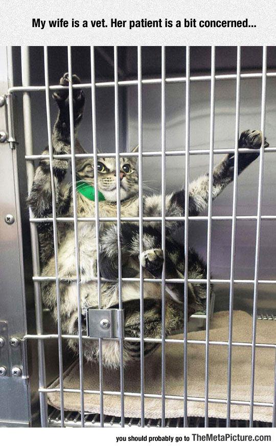 funny-cat-cage-vet