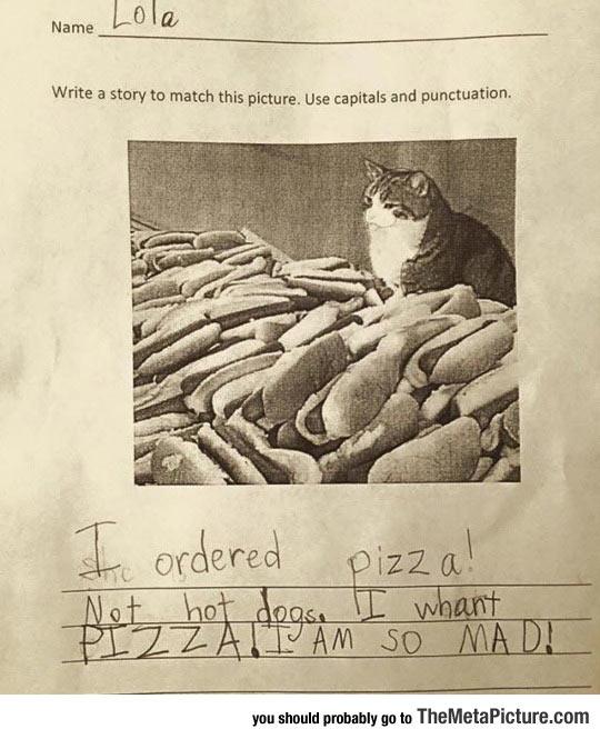 funny-cat-hot-dog-pizza