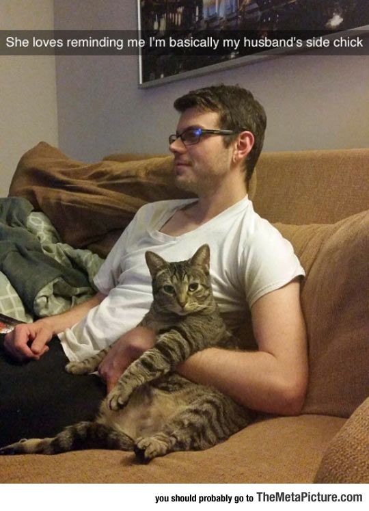funny-cat-watching-TV-couch