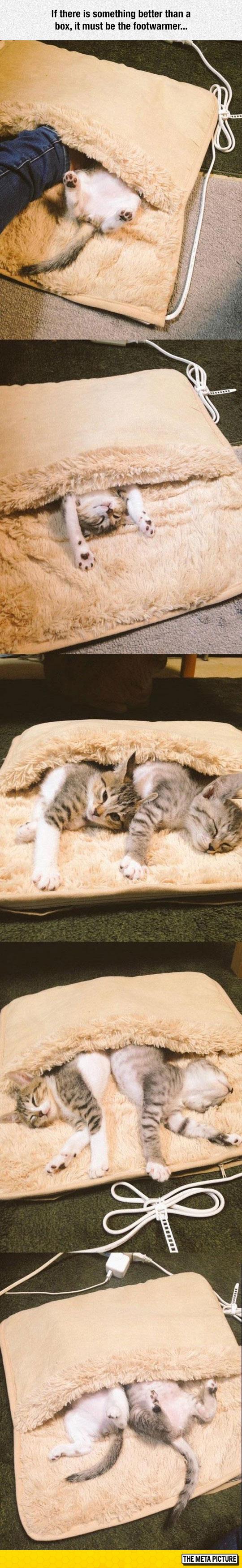 funny-cats-sleeping-foot-warmer