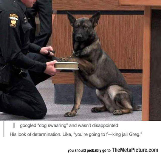 funny-dog-court-police