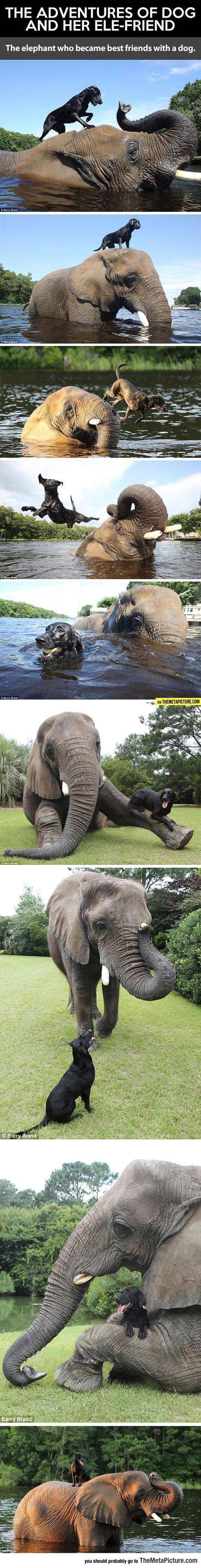 funny-dog-elephant-adventures