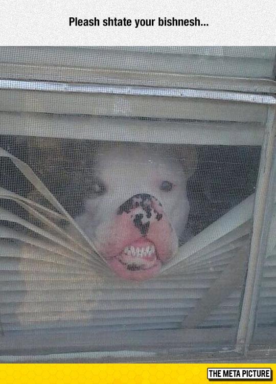 funny-dog-pressing-face-glass-teeth