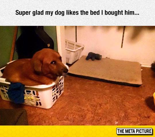 funny-dog-sleeping-new-bed