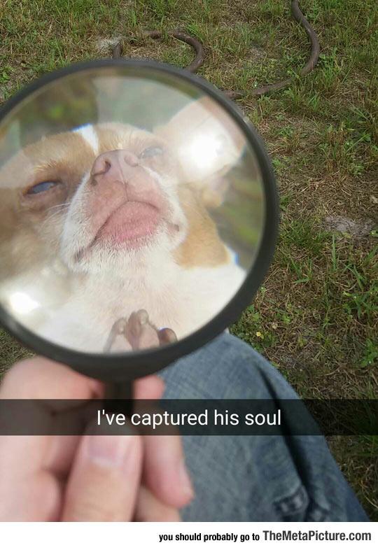 funny-dog-soul-photo-snapchat
