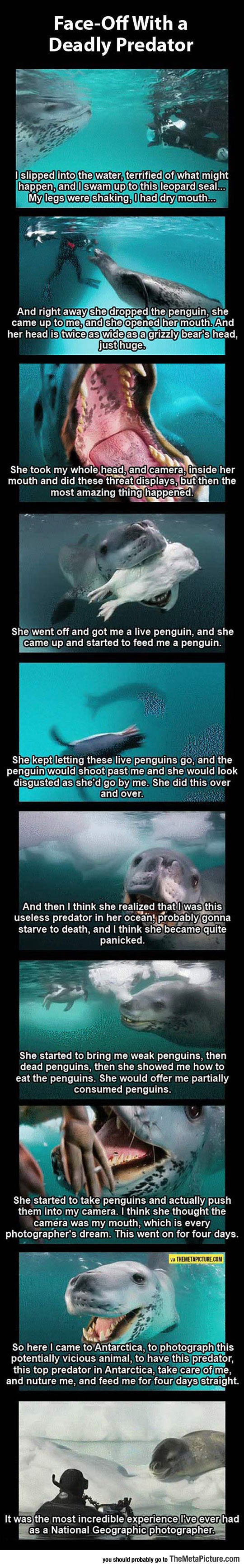 funny-leopard-seal-photographer-National-Geographic