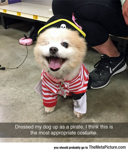 Appropriate Costume For A One-Eyed Dog