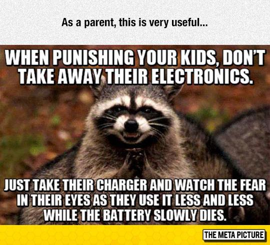 funny-raccoon-meme-suspicious