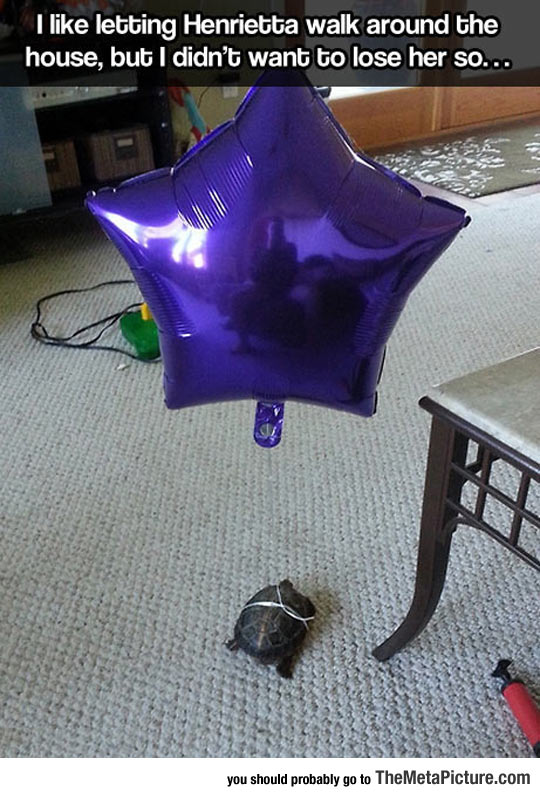 funny-tortoise-turtle-star-balloon