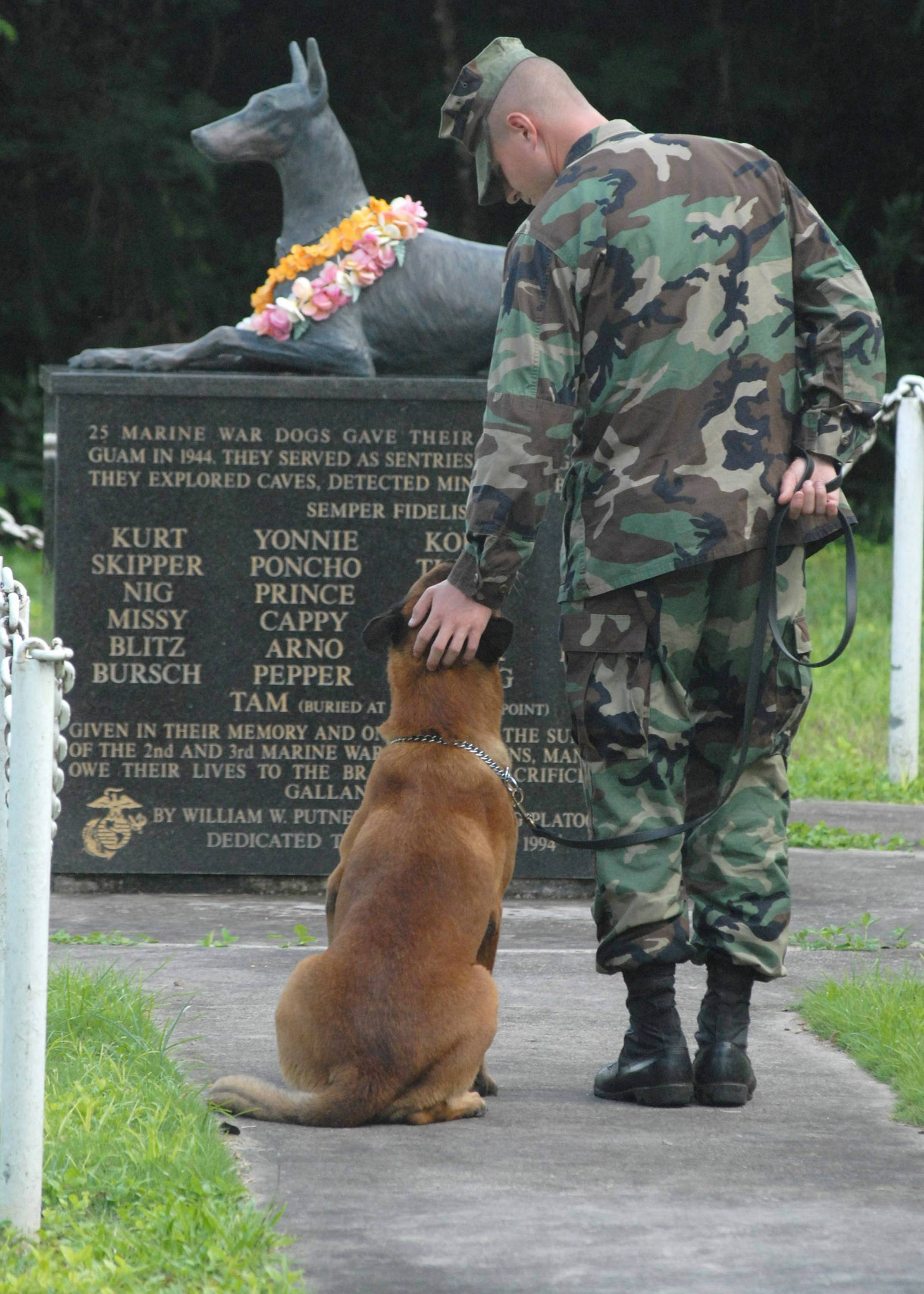 honor of our canine friends on Veteran's Day