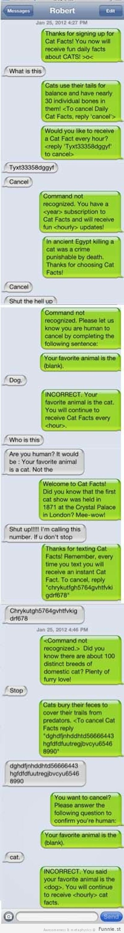 Bust out some Cat Facts