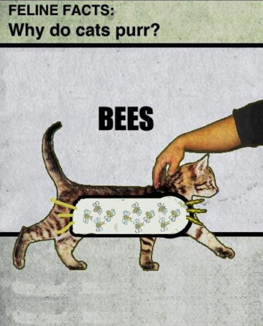 Proper Scientific Explanation