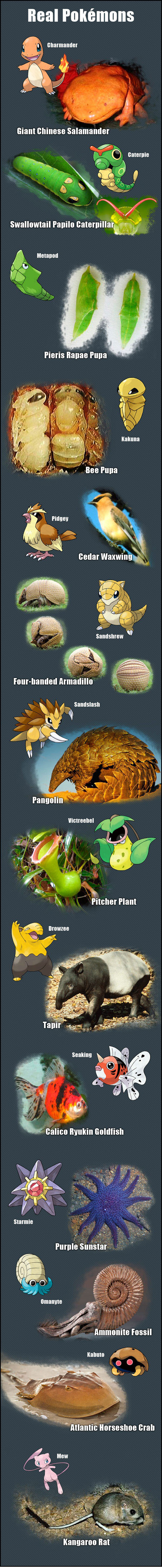 Real world Pokemon