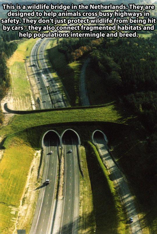 WILDLIFE BRIDGE IN THE NETHERLANDS.