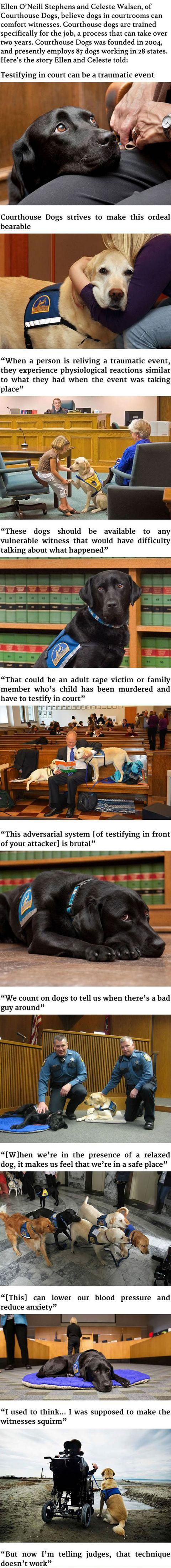 WITNESSES IN COURTROOMS