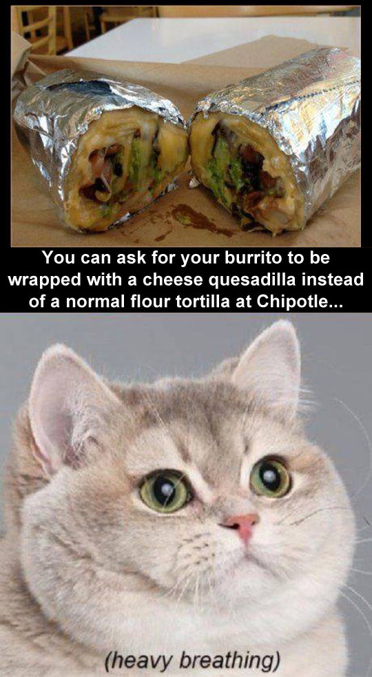 cool-Chipotle-burrito-cheese-tortilla