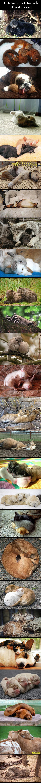cool-animals-pillow-dog-funny-kitten