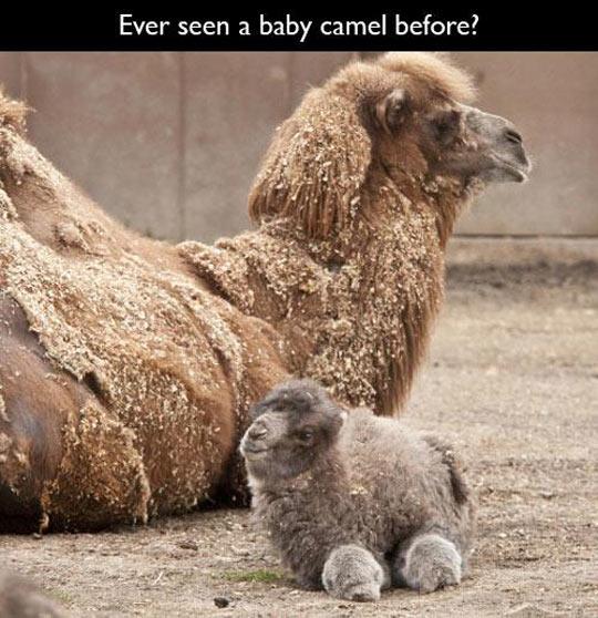 Had No Idea They Were So Fluffy