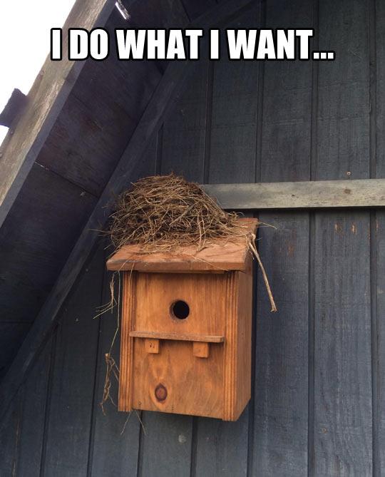 cool-bird-house-nest-outside