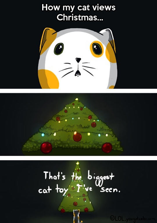 The Reason Cats Attack Christmas Trees