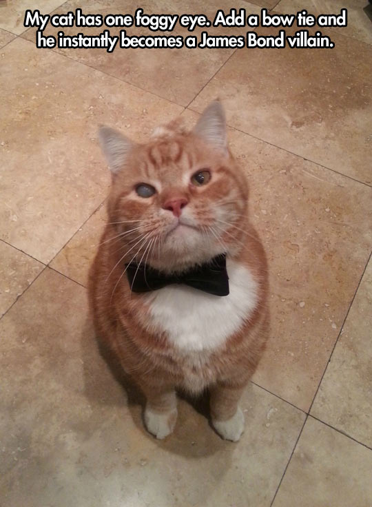 cool-cat-James-Bond-villain-bow-tie