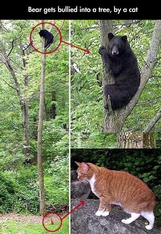 cool-cat-bullying-bear-tree