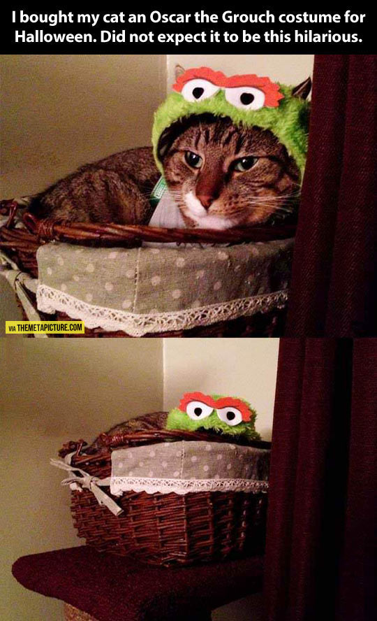 Probably The Best Oscar The Grouch Costume