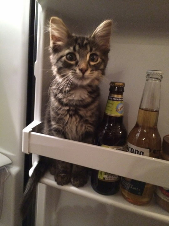 Hmm, What Do I Want Today...Kitty Or Beer?