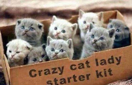 Crazy Cat Lady, The Starter Kit
