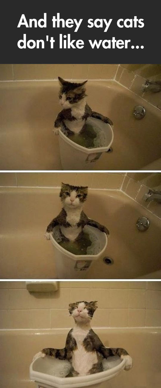 This Cat Is Different